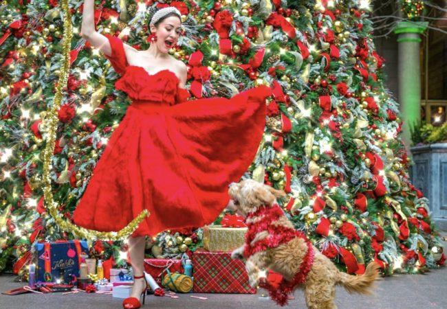 12 Dogs of Christmas – 1st Dog @Mrmonsterpup