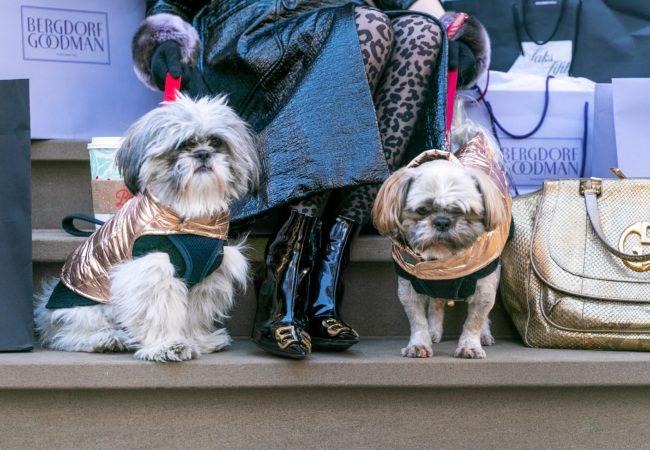 2nd Dog of Christmas – @LuigiNYC